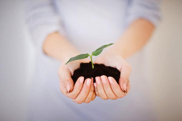Hands Holding Seedling