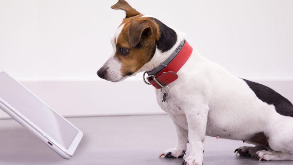 deja-que-tu-perro-elija-los-numeros-de-la-primitiva-llegan-las-apps-para-mascotas