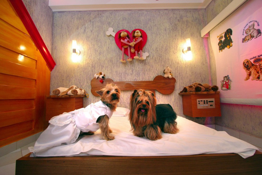 hotel-para-mascotas-2
