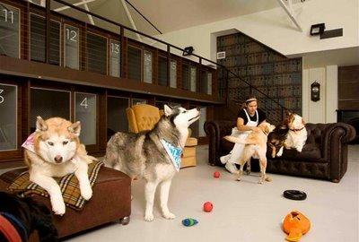 hotel+de+lujo+para+perros