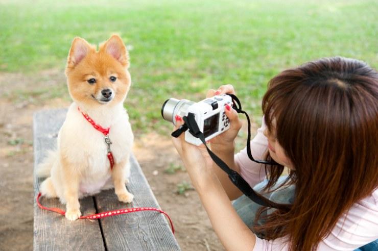 461-large-fotografiar-a-tu-perro