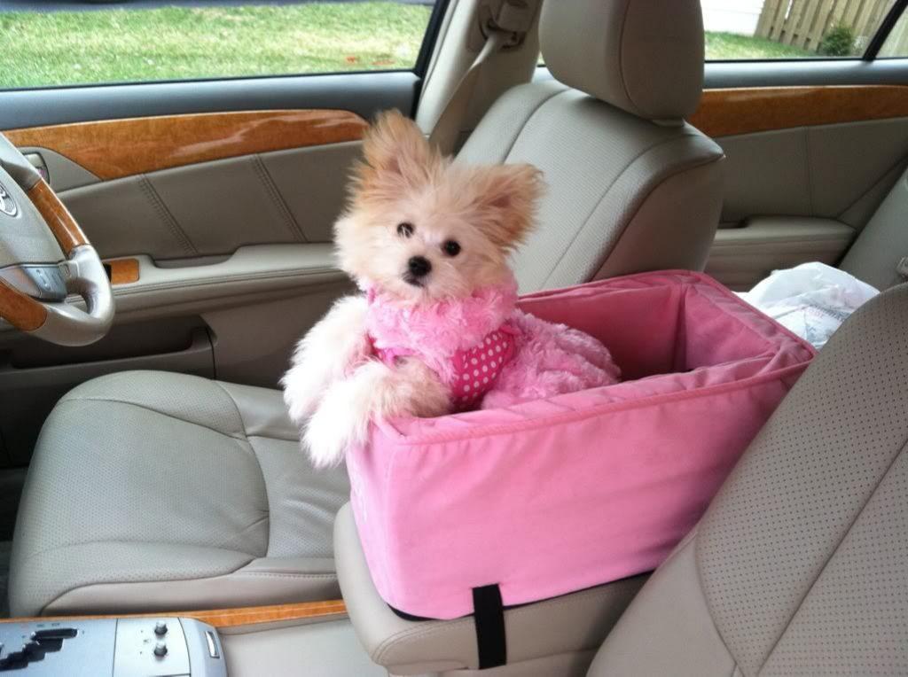 Perro-dentro-de-coche