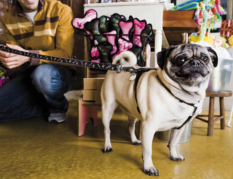 negocios-con-mascotas