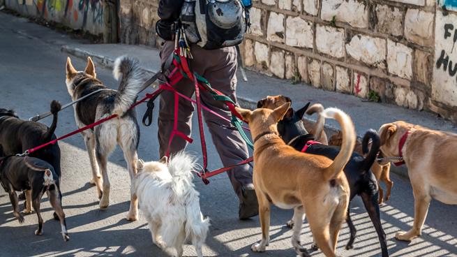 paseos-para-perros-como-idea-de-negocio