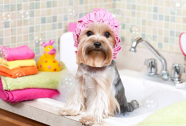 ¿Sabes cómo emprender un Spa para mascotas?