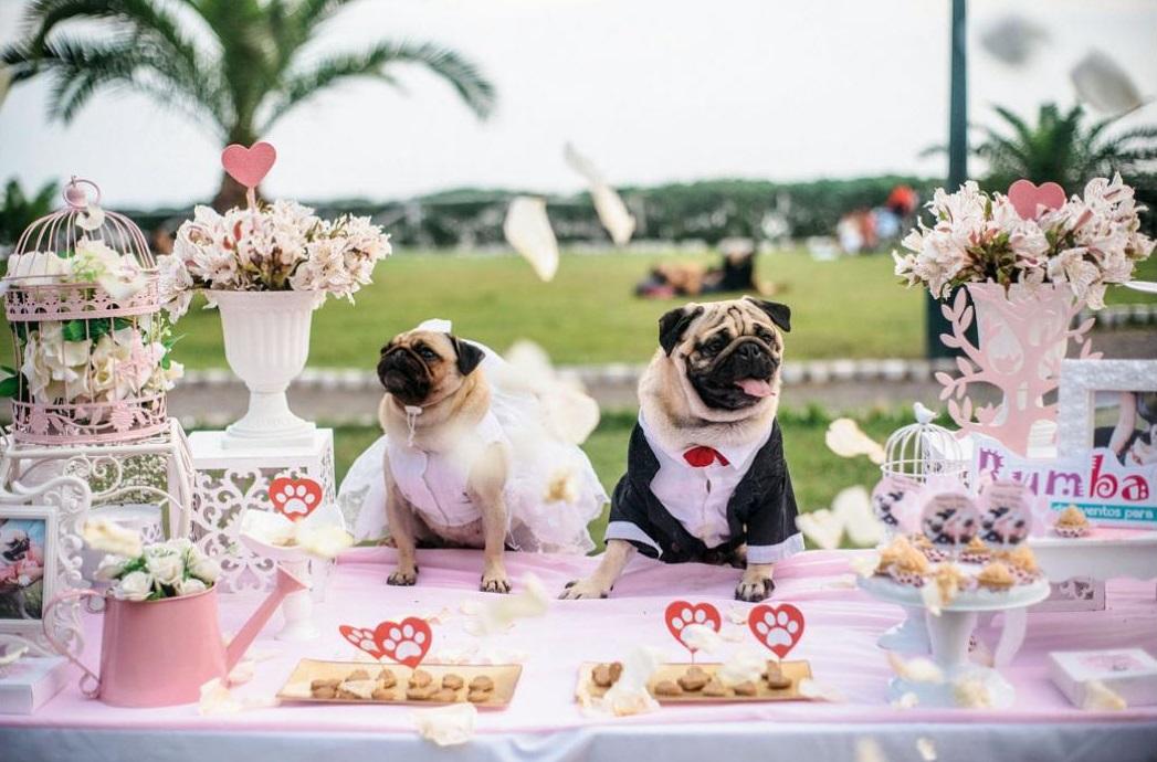6 negocios para atender a las mascotas