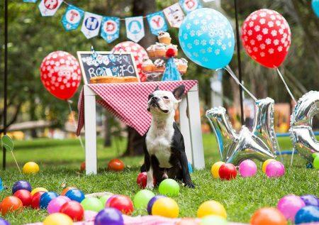 Gana dinero: 6 Ideas de negocios para mascotas