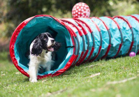 Conoce 10 ideas de negocios para mascotas