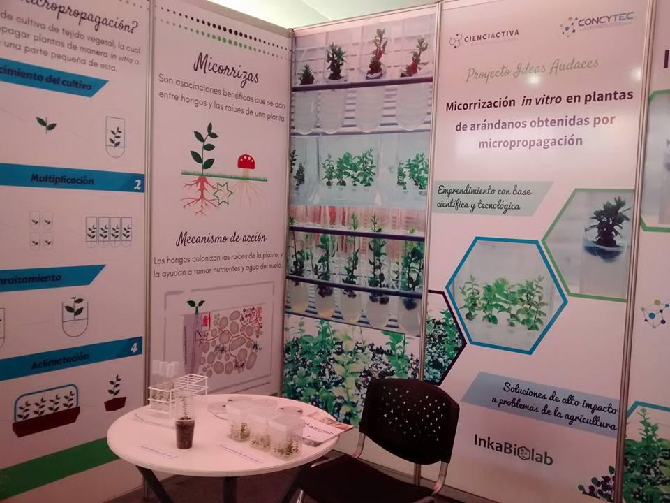 Biotecnología: jóvenes potencian cultivos de arándanos