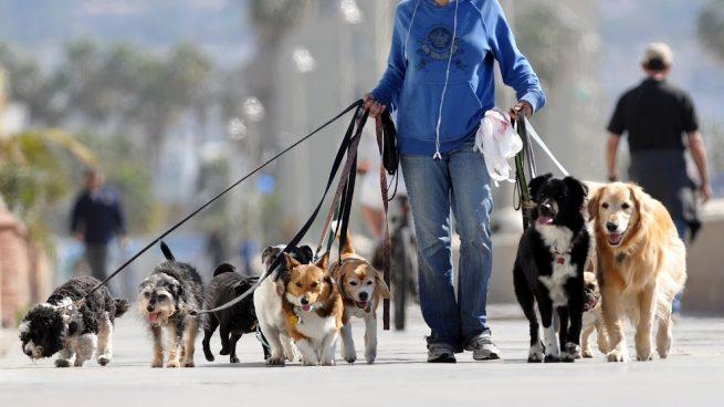 5 Ideas para ganar dinero en rubro de mascotas