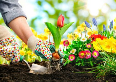5 Ideas de negocio en el sector Botánico