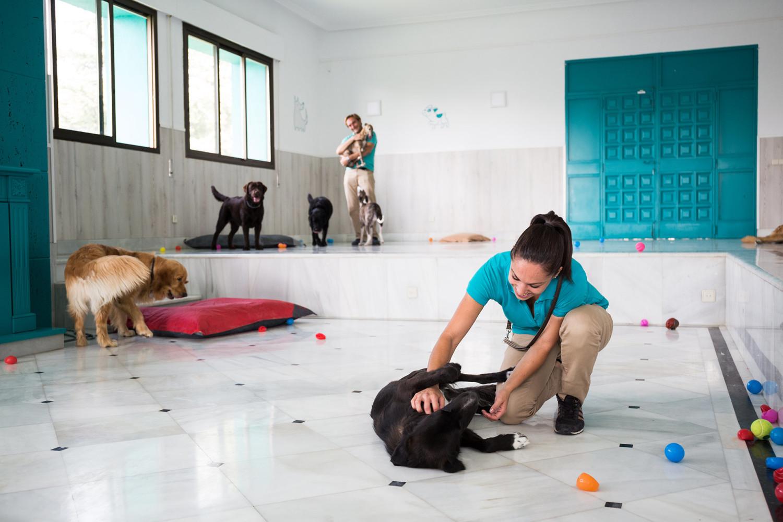Ideas de negocios rentables para mascotas