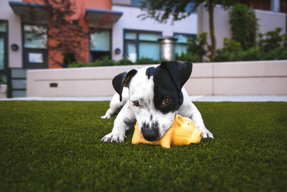 7 Negocios innovadores para mascotas