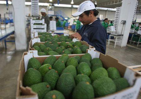 Agro: Qué exportaciones demandan más