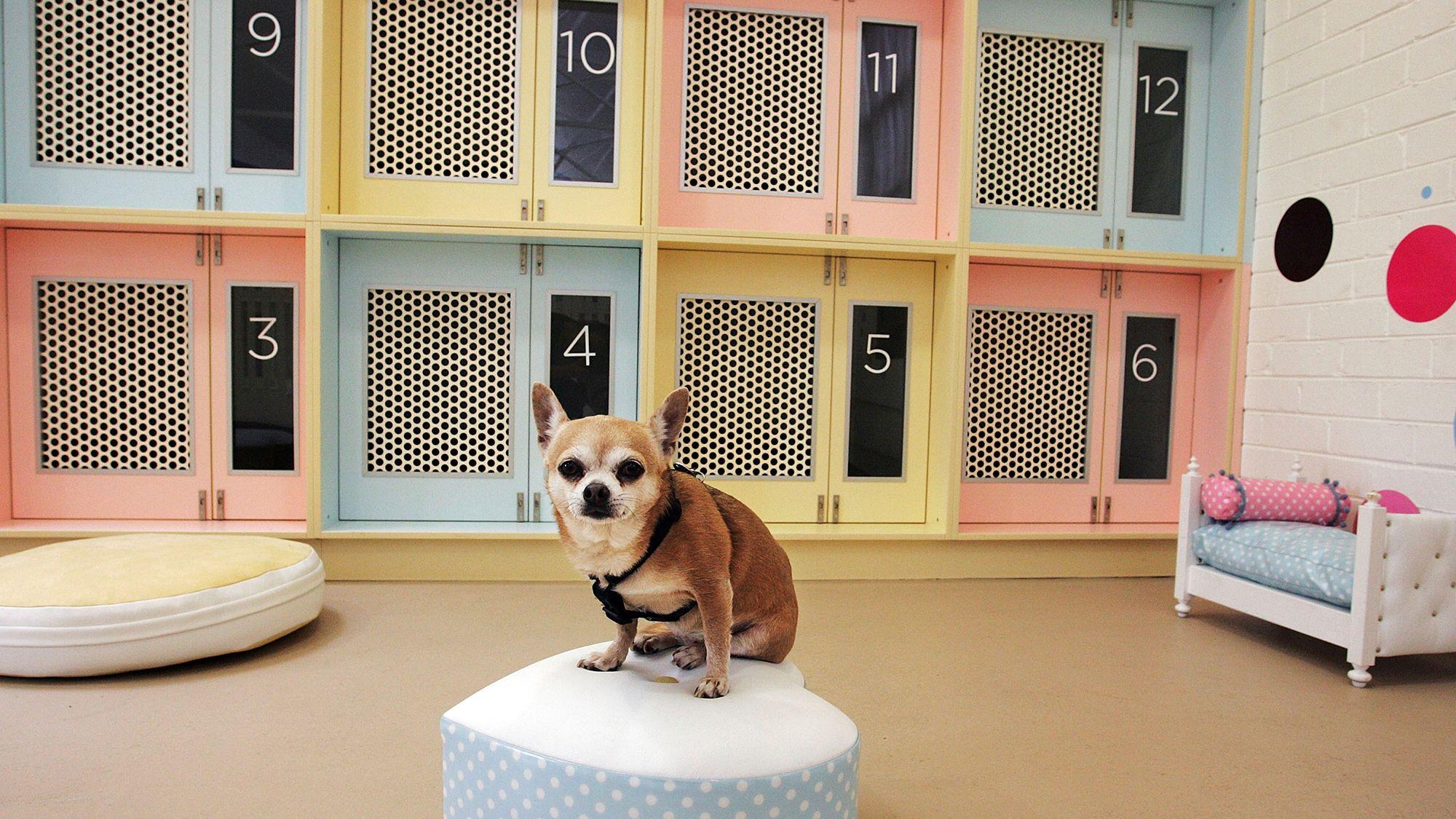 Ideas de negocio rentables para mascotas