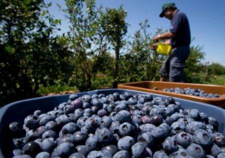 4 Agroexportaciones más demandadas