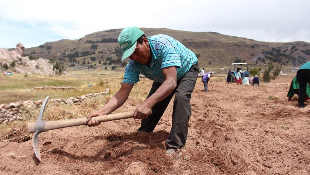 Conoce 2 Fondos Estatales para apoyar al agro