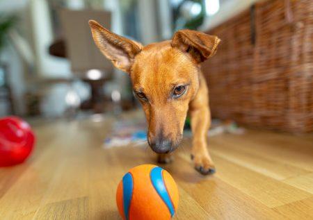 Mascotas: 7 Ideas de negocio rentables