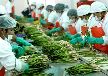 Exportaciones caen 27% en primer semestre