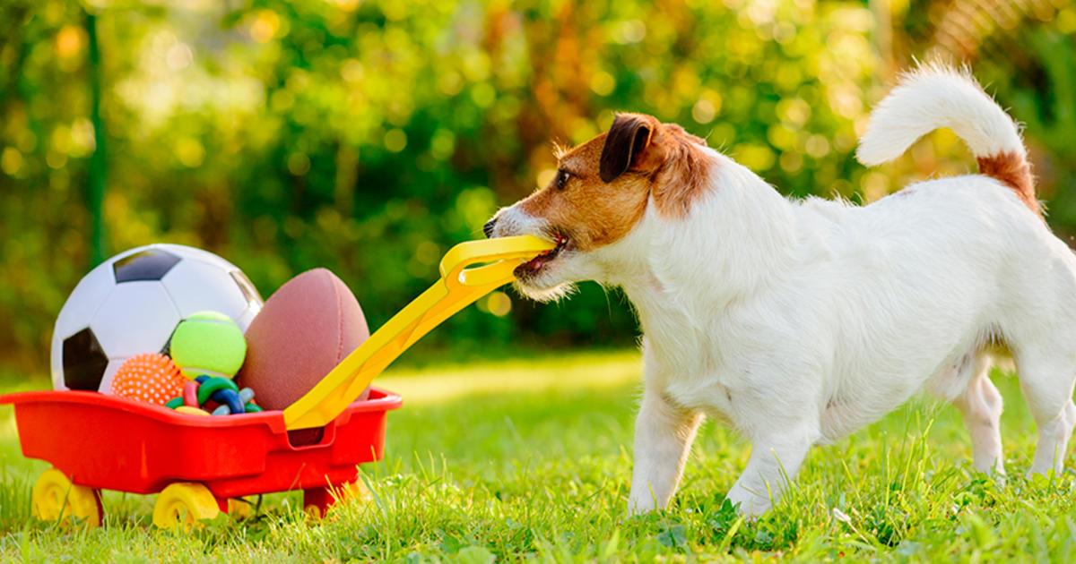 8 Ideas de negocios para mascotas