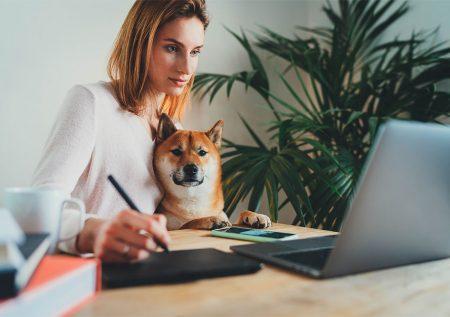 Crean plataforma online para mascotas