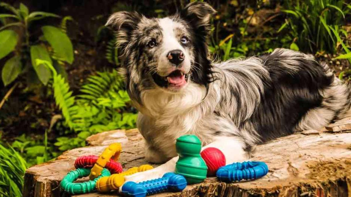 7 Ideas de Negocios para mascotas
