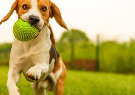 Negocio: Tienda online para mascotas