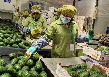 Agroexportación: ¿Qué demanda el mercado?