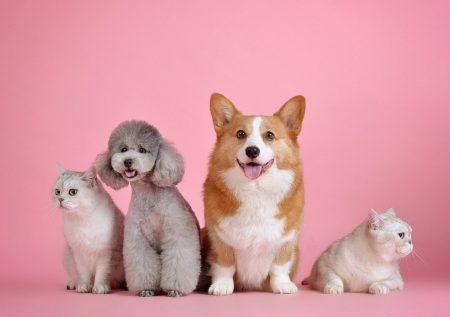 7 Ideas de negocios sobre mascotas